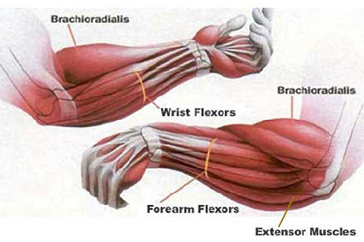 Forearm_Exercises