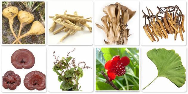 Адаптогени билки при стрес и преумора