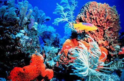 Топ новини за Фитнес » Диети » Защо коралов калций » Форум » Мнения