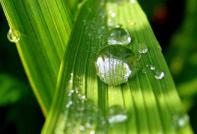Хлорофил зеленото чудо