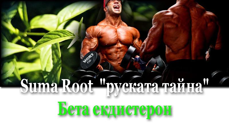 Топ новини за Фитнес » Диети » Suma Root - руския анаболнен секрет » Форум » Мнения