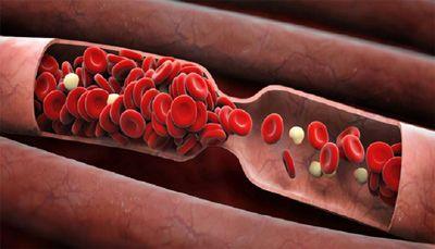 Натокиназа за здрава сърдечно-съдова система