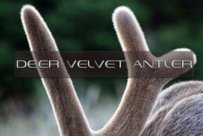 Екстракт от еленови рога ползи за здравето и спорта