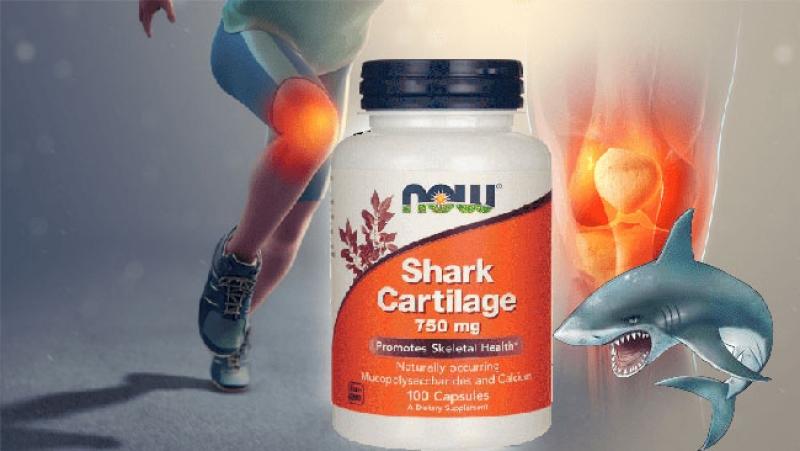 Полезна информация - Хрущял от акула за какво се използва