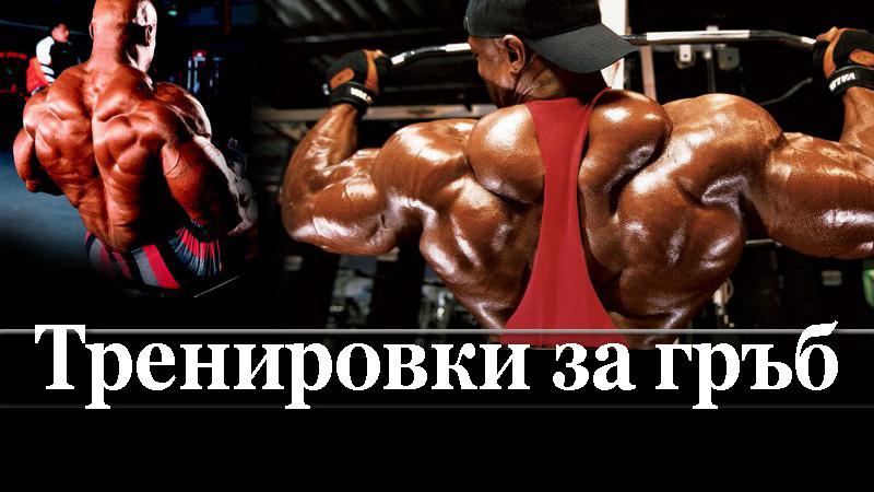 Полезна информация - Как тренират гръб шампионите