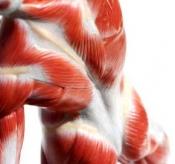 Полезна информация - 5 начина за по-бързо възстановяване от мускулната треска