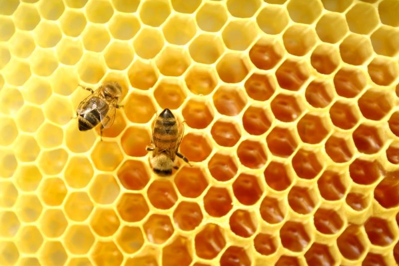 Топ новини за Фитнес » Диети » За Апитерапията и пчелните продукти » Форум » Мнения