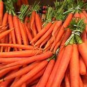 Топ новини за Фитнес » Диети »  Морковите и ползата от тях » Форум » Мнения