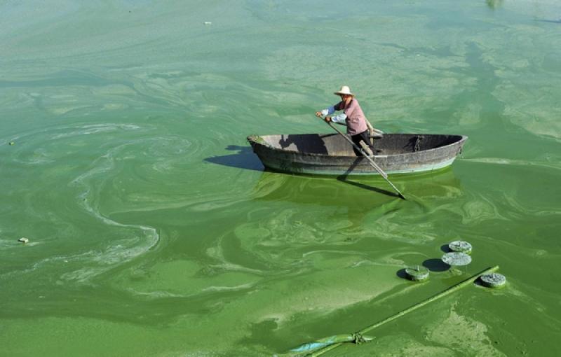 Топ новини за Фитнес » Диети » Минерали  в синьозелените водорасли AFA  » Форум » Мнения
