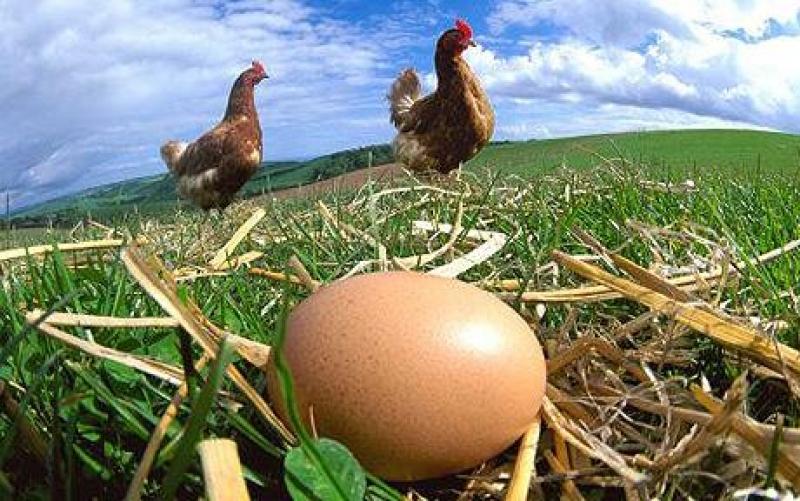 Полезна информация - Хранителна стойност на яйцето
