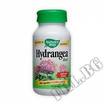 Действие на Хортензия корен|Hydrangea Root мнения.Най-ниска цена от Fhl.bg-хранителни добавки София