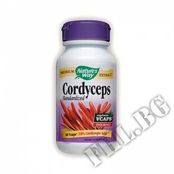 Действие на Кордицепс|Cordyceps Standardized мнения.Най-ниска цена от Fhl.bg-хранителни добавки София