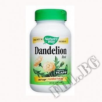 Действие на Глухарче корен Dandelion Root мнения.Най-ниска цена от Fhl.bg-хранителни добавки София