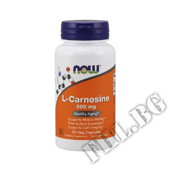Съдържание » Цена » Прием » L-Carnosine