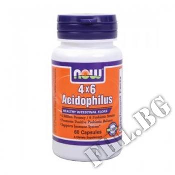 Съдържание » Цена » Прием »  Acidophilus 4X6