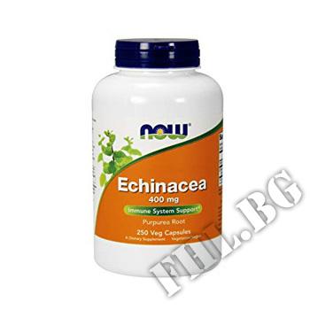 Съдържание » Цена » Прием » Echinacea 400 мг