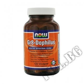 Съдържание » Цена » Прием »  Gr8-Dophilus