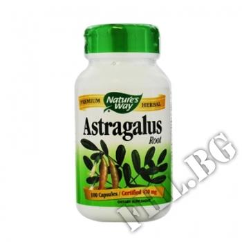 Съдържание » Цена » Прием » Astragalus root
