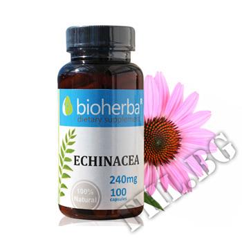 Съдържание » Цена » Прием » Ехинацея 240 мг