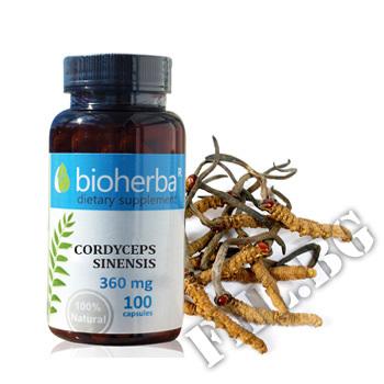 Съдържание » Цена » Прием » Cordyceps sinensis
