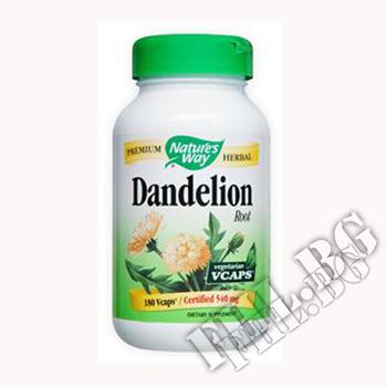 Съдържание » Дозировка » Прием » Как се пие » Глухарче корен Dandelion Root » Nature's Way » Здраве и Тонус